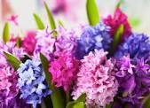 Spring Flower Sale Begins at BHS